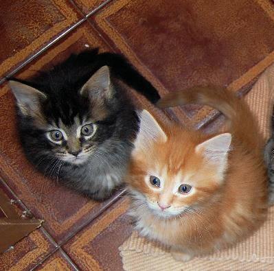 Esempio di immagine ottimizzata seo con gattini